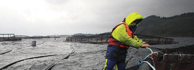 Fish farmer standing on a pen in situ